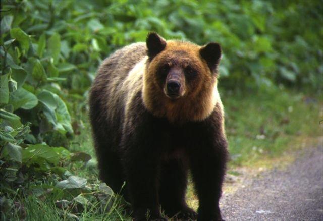 クマの画像 p1_22